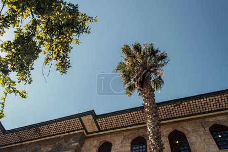 Bottom view of trees near building and blue sky at background in Istanbul, Turkey