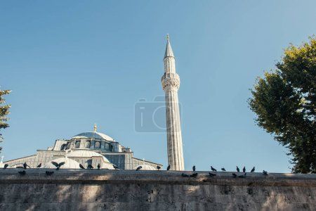 Doves near exterior of Mihrimah Sultan Mosque, Istanbul, Turkey