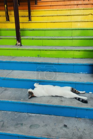 Homeless cat lying on colorful stairs outdoors