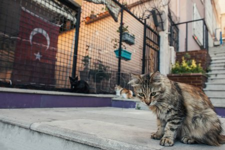 Photo for Homeless cat sitting on stair on urban street in Istanbul - Royalty Free Image