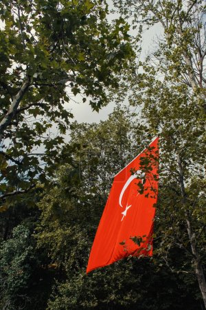 Low angle view of turkish flag near trees on street in Istanbul, Turkey