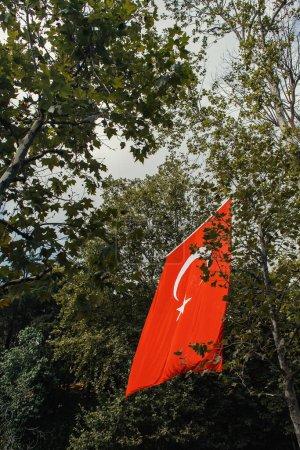 Photo pour Vue à angle bas du drapeau turc près des arbres dans la rue à Istanbul, Turquie - image libre de droit