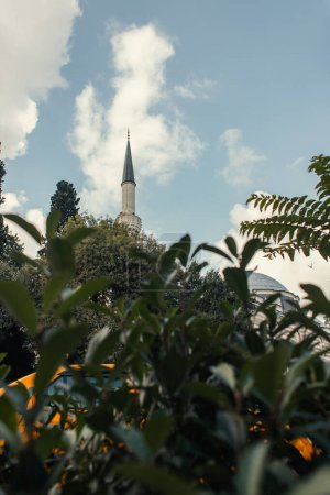 Roof and column of Mihrimah Sultan Mosque and plant on blurred foreground, Istanbul, Turkey