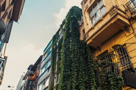 Low angle view of hanging down plants on facade of building, Istanbul, Turkey