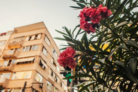 Low angle view of blooming plant with buildings on blurred background, Istanbul, Turkey