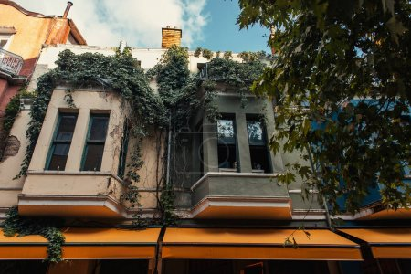 Photo for Plants on balconies of house on urban street in Istanbul, Turkey - Royalty Free Image