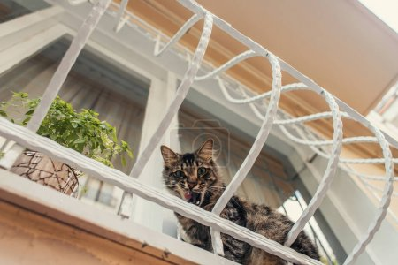 Bottom view of cat sitting near plant on balcony of house