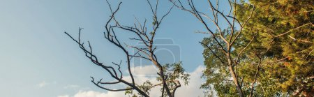 Low angle view of dry branches of tree with sky at background, banner