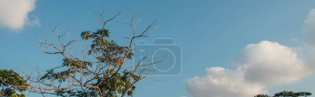 Photo pour Arbre avec feuilles et branches sèches à l'extérieur, bannière - image libre de droit
