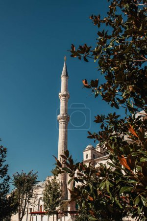 green magnolia tree near Mihrimah Sultan Mosque with minaret against blue sky, Istanbul, Turkey