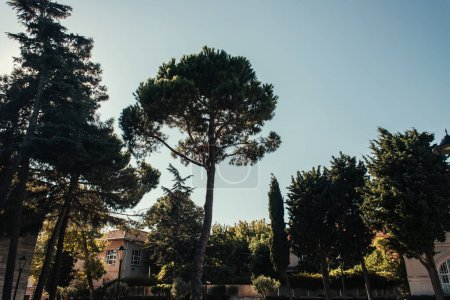 Photo for High trees, building and lanterns in picturesque park - Royalty Free Image