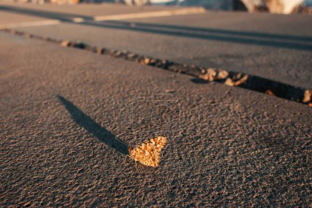 Photo for Selective focus of butterfly on asphalt road - Royalty Free Image