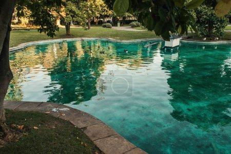 Photo pour Canards sauvages dans le lac artificiel, entouré d'arbres verts dans le parc - image libre de droit