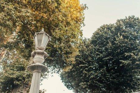 Photo pour Vue à angle bas de lanterne décorée près des arbres élevés contre ciel clair - image libre de droit