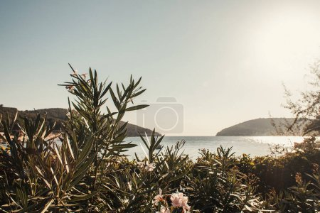 blossoming oleander, and seascape with green hills