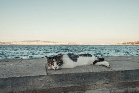 street cat lying on seafront under cloudless sky