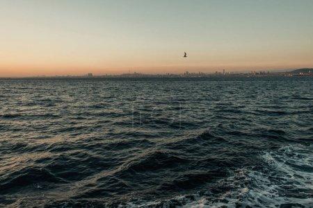 Photo pour Mouette volant au-dessus de la mer ondulée au coucher du soleil - image libre de droit