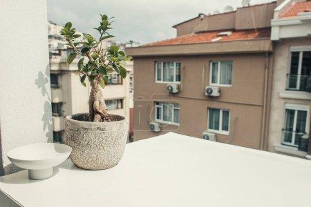 Photo pour Bansai arbre en pot de fleurs sur le rebord de la fenêtre - image libre de droit