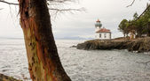 Madrona Tree Lime Kiln Lighthouse San Juan Island Haro Strait