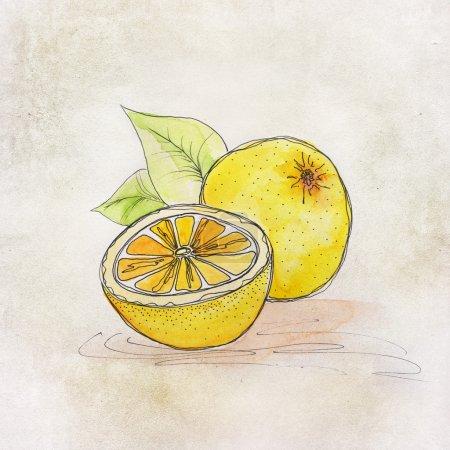 Photo pour Illustration de fruits avec aquarelle - image libre de droit