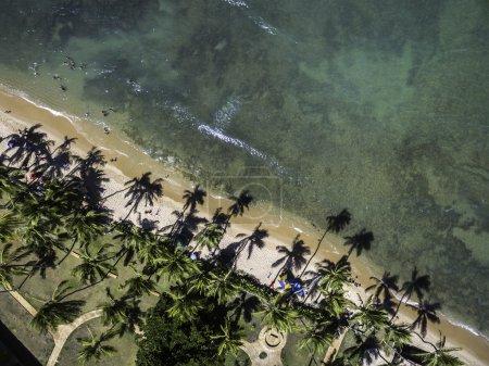 wonderful beach with palm trees