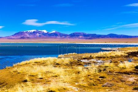 Atacama Desert Salar