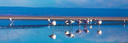 Atacama Salar with Flamingo