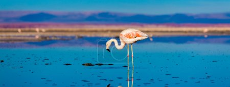 Atacama Salar with Flamingo