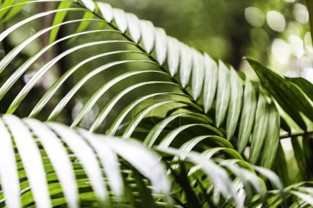 Plants in Amazon Forest