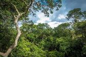 Amazonský deštný prales, Brazílie