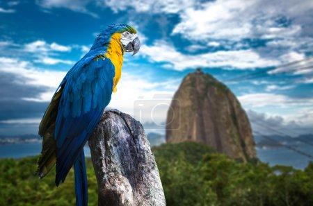 Blue and Yellow Macaw in Rio de Janeiro