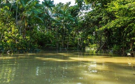 Wetlands in Belem do Para, Brazil