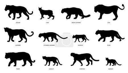 Illustration pour Silhouettes de chats sauvages sur le fond blanc - image libre de droit