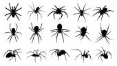 Spider silhouettes on the white background