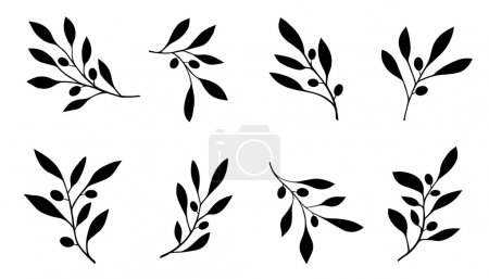 Illustration for Olive branch on the white background - Royalty Free Image