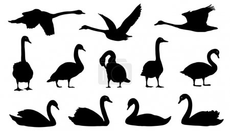 Illustration for Swan silhouettes on the white background - Royalty Free Image