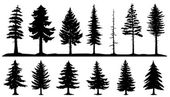 conifer tree silhouettes