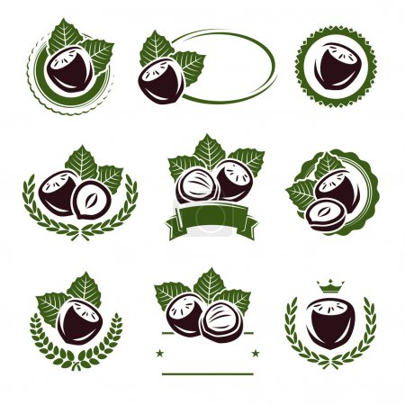 Hazelnut nuts labels and elements set. Vector