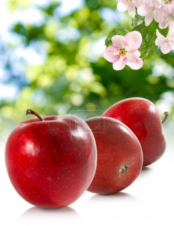 image of apples  in the garden on a green background close up
