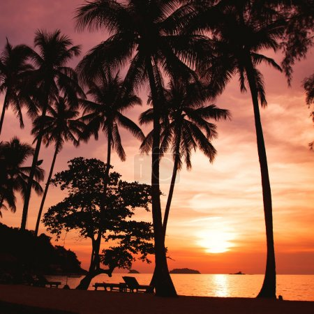 Photo for Sunset on the tropical beach with palm trees silhouettes - Royalty Free Image