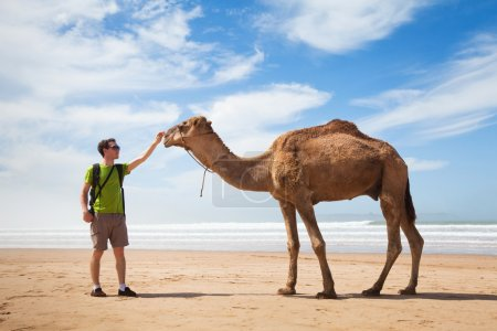 Photo for Tourist touching camel on  desert - Royalty Free Image