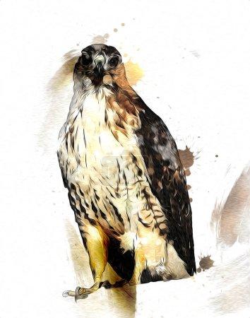 Photo pour Falcon atterrissage swoop main dessiner et peindre la couleur sur l'illustration de fond, hawk vintage rétro - image libre de droit