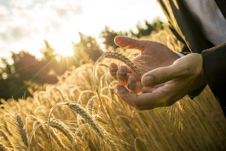 Photo pour Gros plan des mains d'un homme d'affaires coupant une oreille mûre de blé en la tenant devant l'orbe ardent du soleil levant du matin dans une image conceptuelle pour l'inspiration des entreprises et de démarrage . - image libre de droit