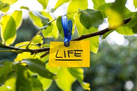 Beautiful vivacious life concept