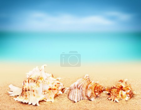 seashells on the sandy beach