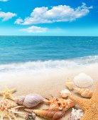 Shell and starfish on sandy beach