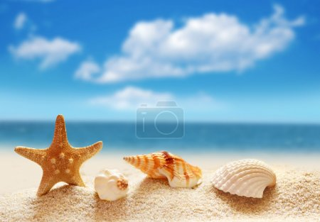 Seashells on a sandy beach.