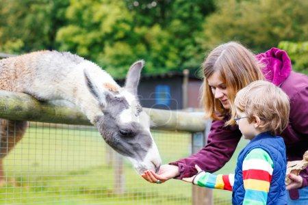 Kid boy and his mother feeding lama on an animal farm