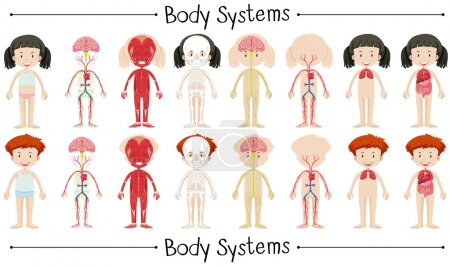 Illustration pour Système de corps de garçon et fille illustration - image libre de droit