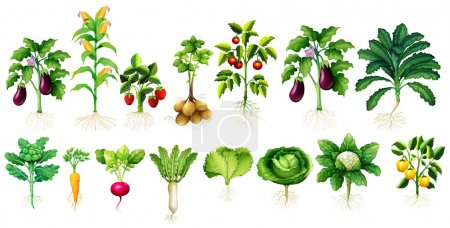 Illustration for Many kind of vegetables with leaves and roots illustration - Royalty Free Image
